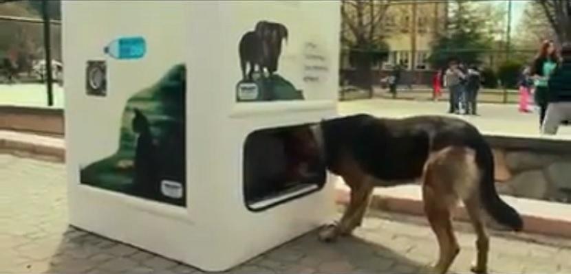 Pas-koji-jede