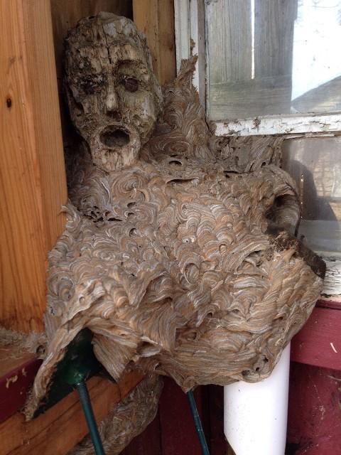 gnijezdo stršljena