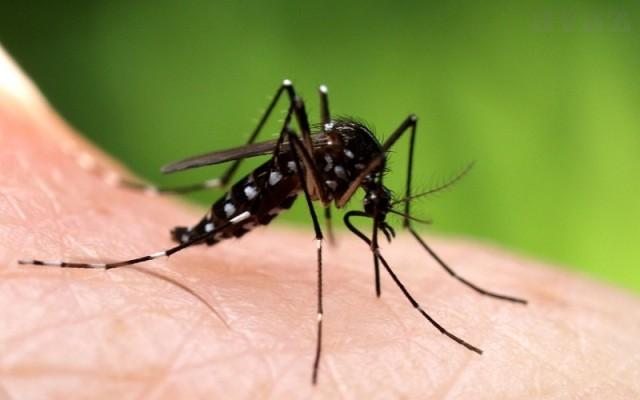 komarac komarci ubod ugriz zaštita