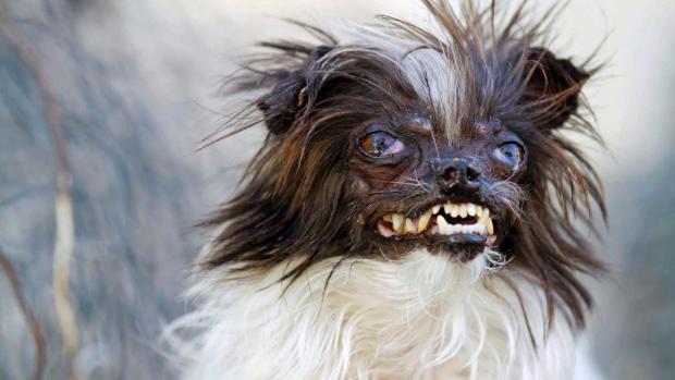 peanut-ugliest-dog