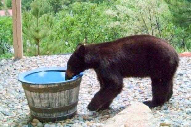 voda-medvjed-3-620x413