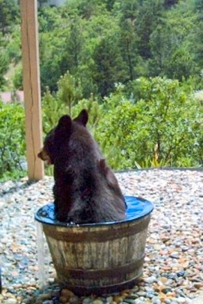 voda-medvjed-4