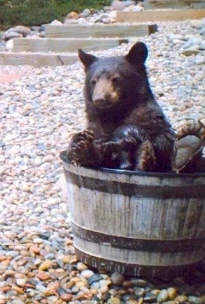 voda-medvjed-7