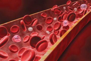 krv željezo zdravlje eritrociti