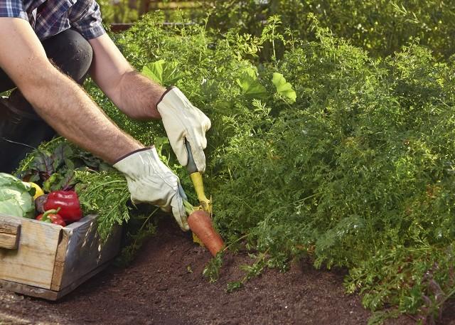 mladi poljoprivrednici vrtlarenje