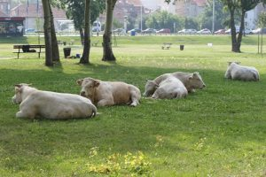 krave zagreb prosvjed ministarstvo poljoprivrede