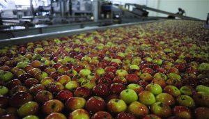 jabuke, billa, pesticidi